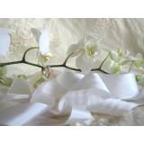 Белая шелковая лента (продажа по метрам)